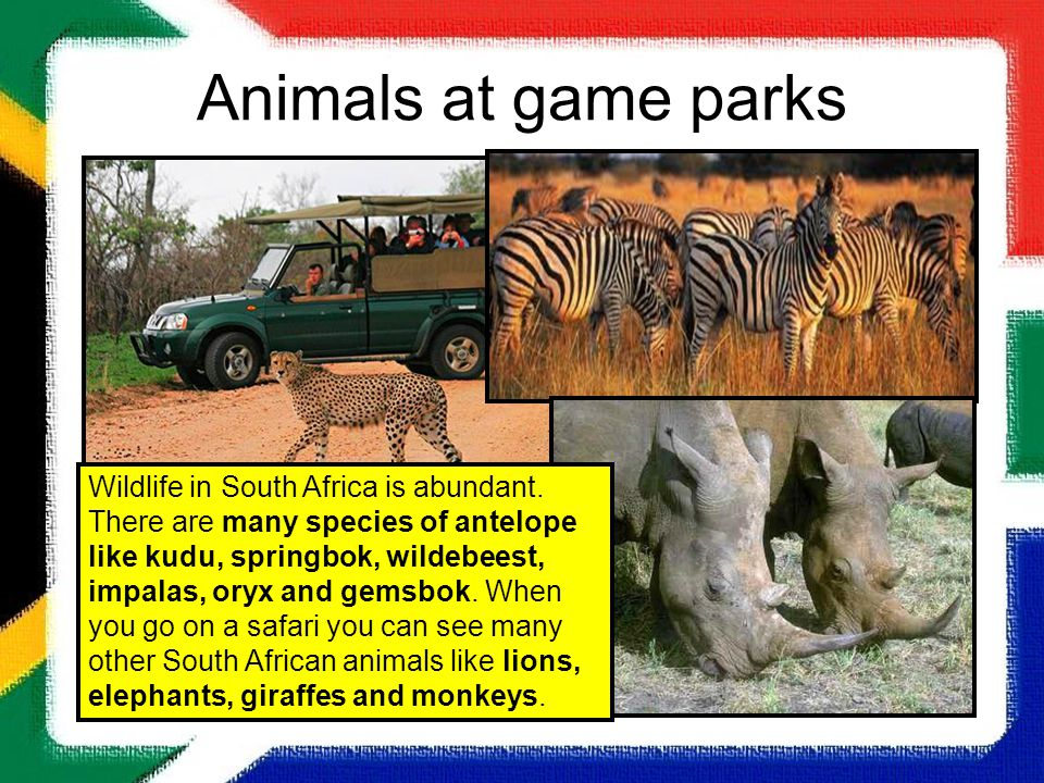 Animals at game parks