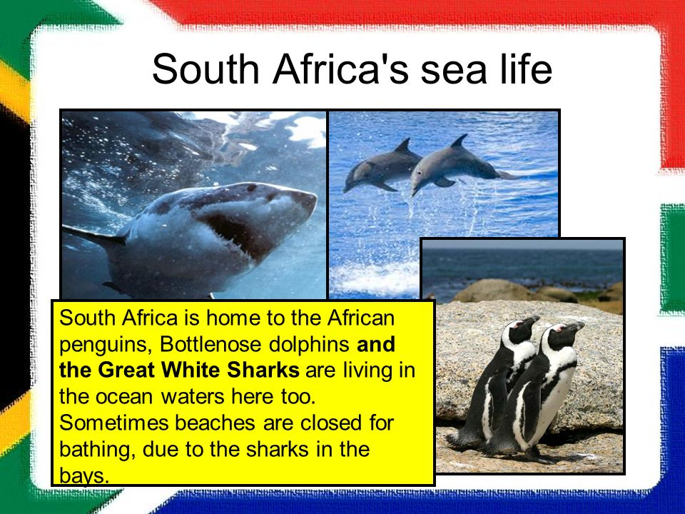 South Africa s sea life