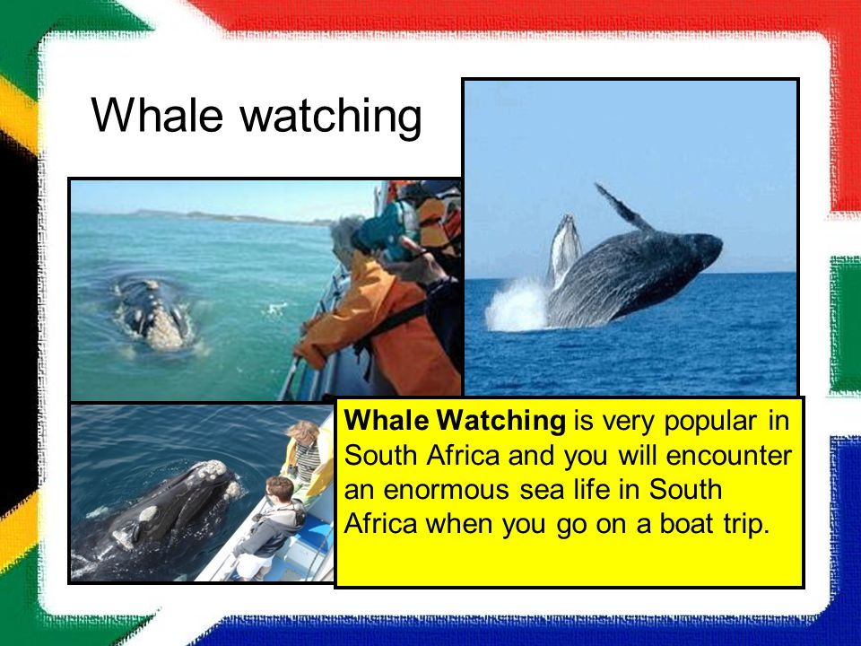 Whale watching Whale Watching is very popular in South Africa and you will encounter an enormous sea life in South Africa when you go on a boat trip.