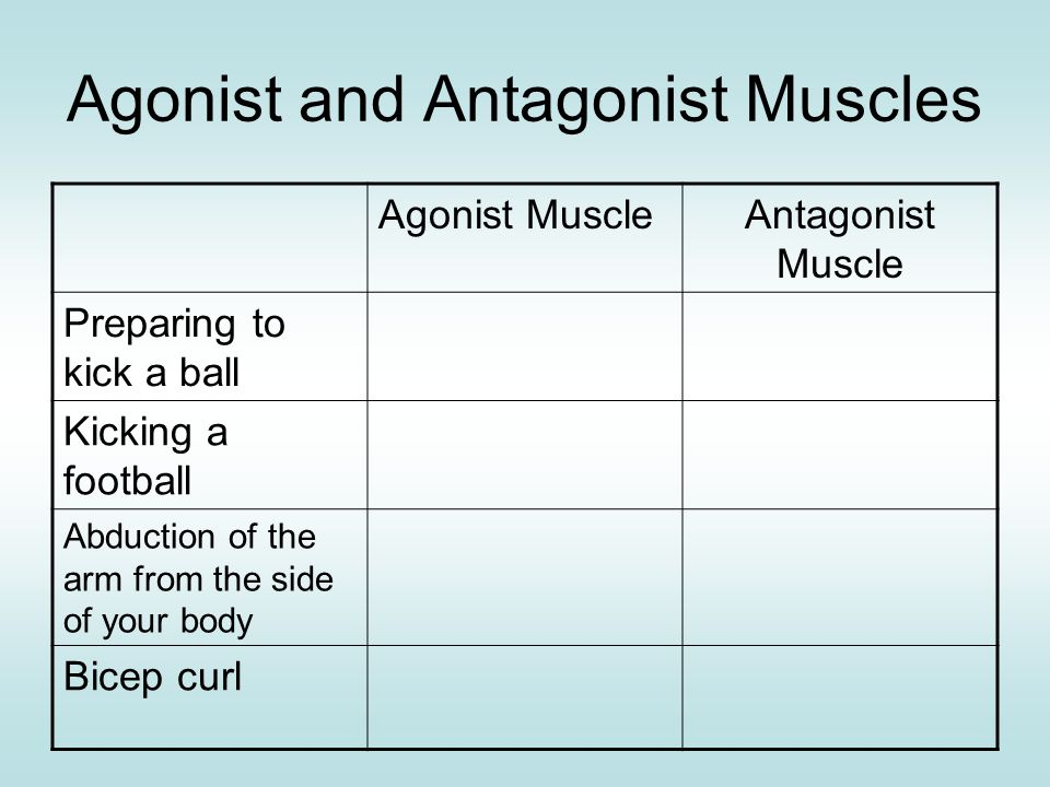 Agonist and Antagonist Muscles