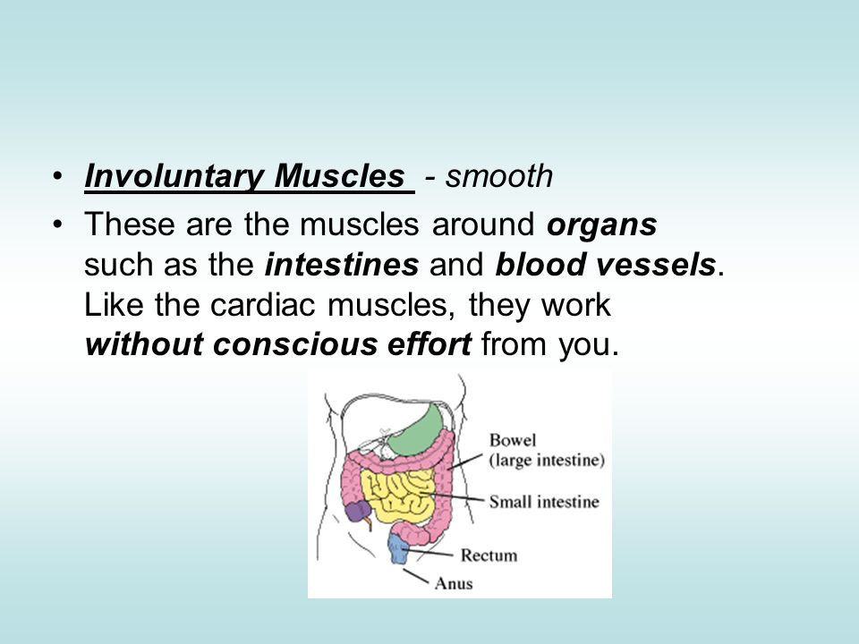 Involuntary Muscles - smooth