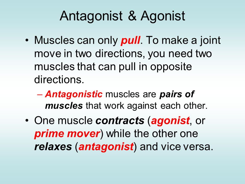 Antagonist & Agonist Muscles can only pull. To make a joint move in two directions, you need two muscles that can pull in opposite directions.