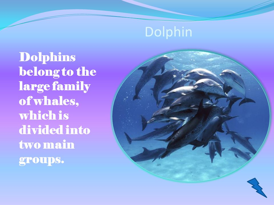 Dolphin Dolphins belong to the large family of whales, which is divided into two main groups.