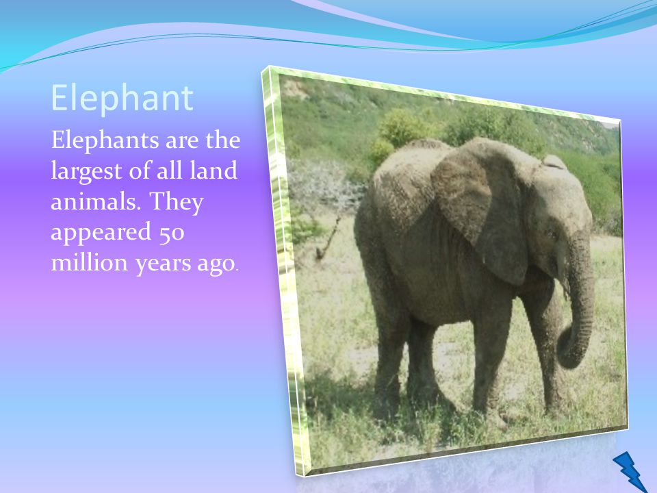 Elephant Elephants are the largest of all land animals. They appeared 50 million years ago.