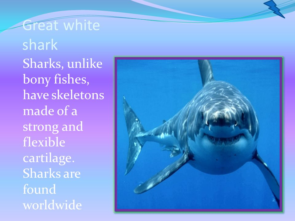 Great white shark Sharks, unlike bony fishes, have skeletons made of a strong and flexible cartilage.