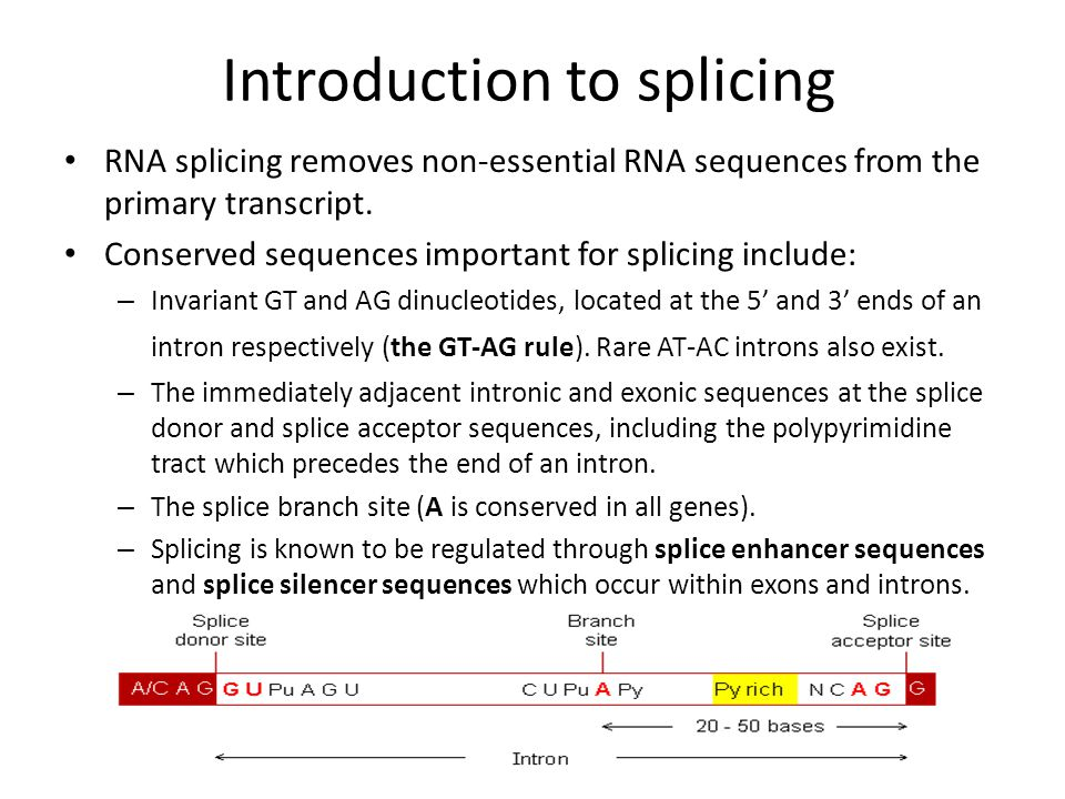 Introduction to splicing