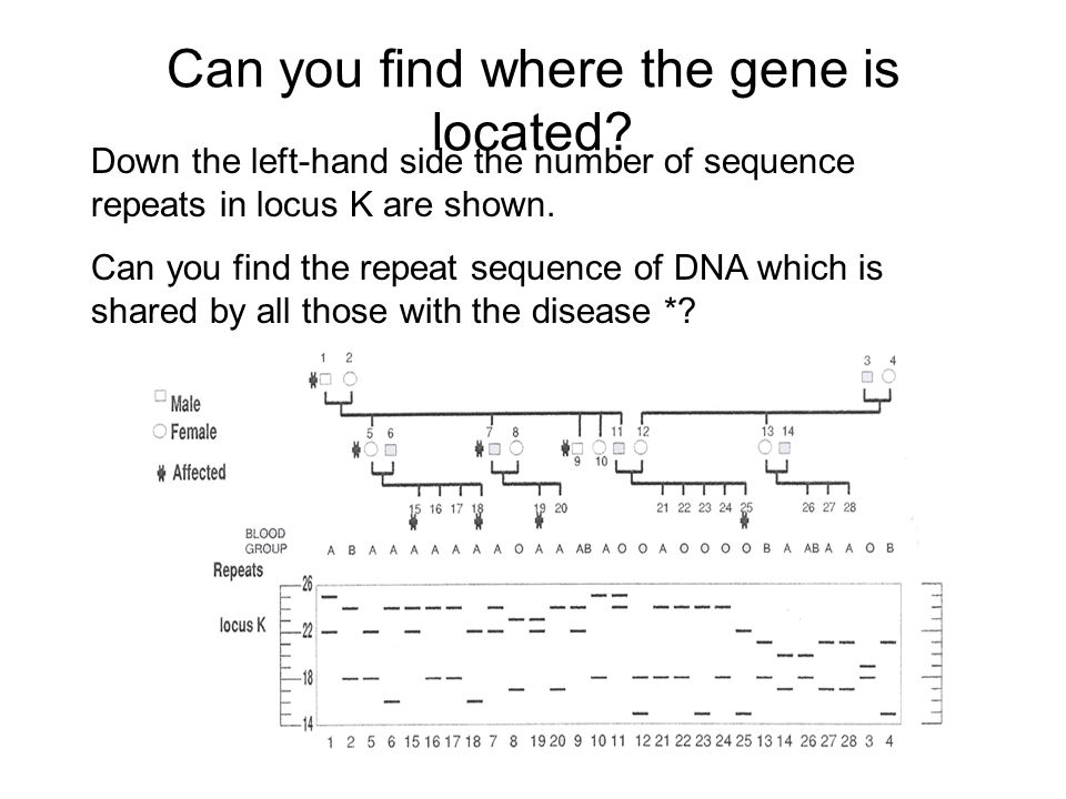 Can you find where the gene is located