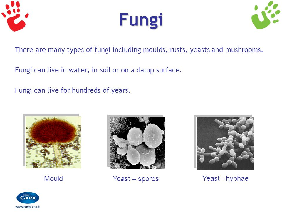 Fungi There are many types of fungi including moulds, rusts, yeasts and mushrooms. Fungi can live in water, in soil or on a damp surface.