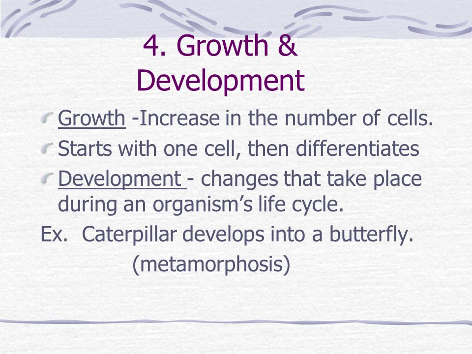 4. Growth & Development Growth -Increase in the number of cells.