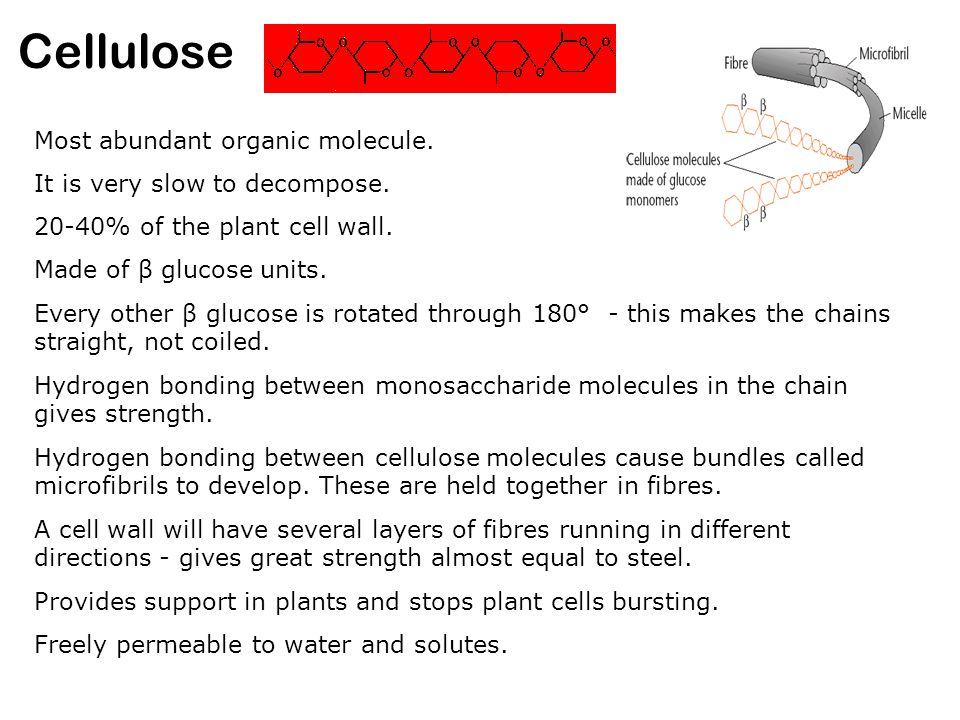 Cellulose Most abundant organic molecule.