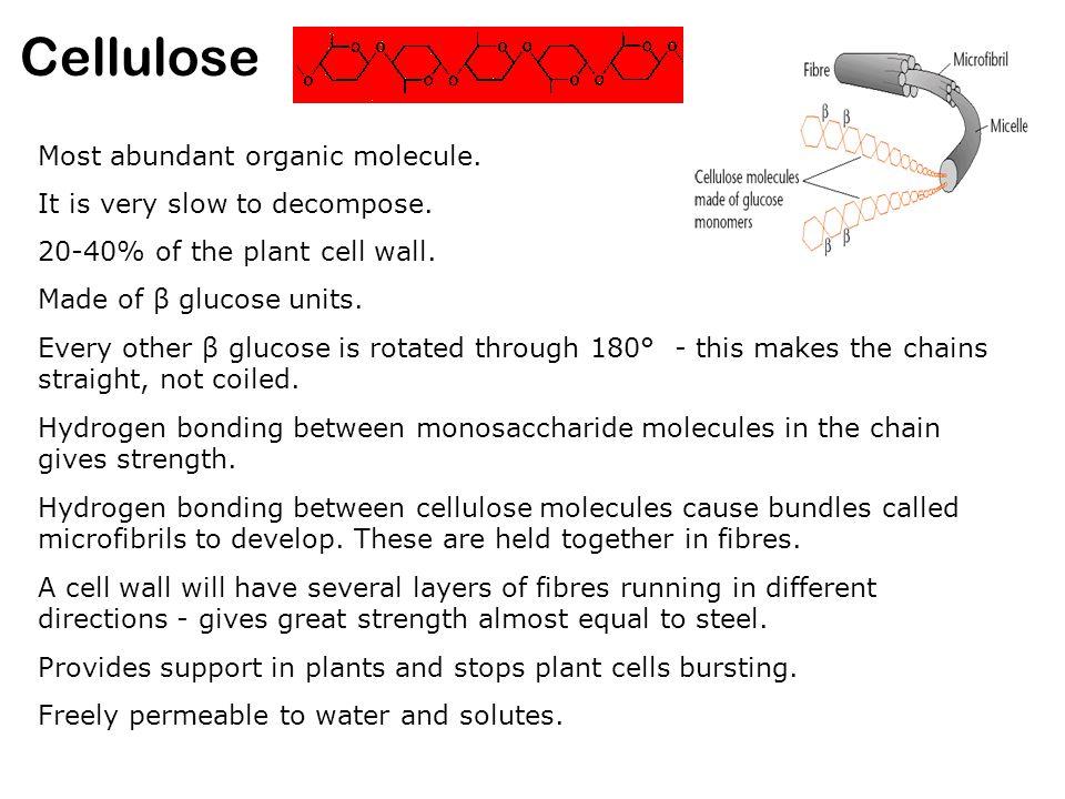 Cellulose Most abundant organic molecule.