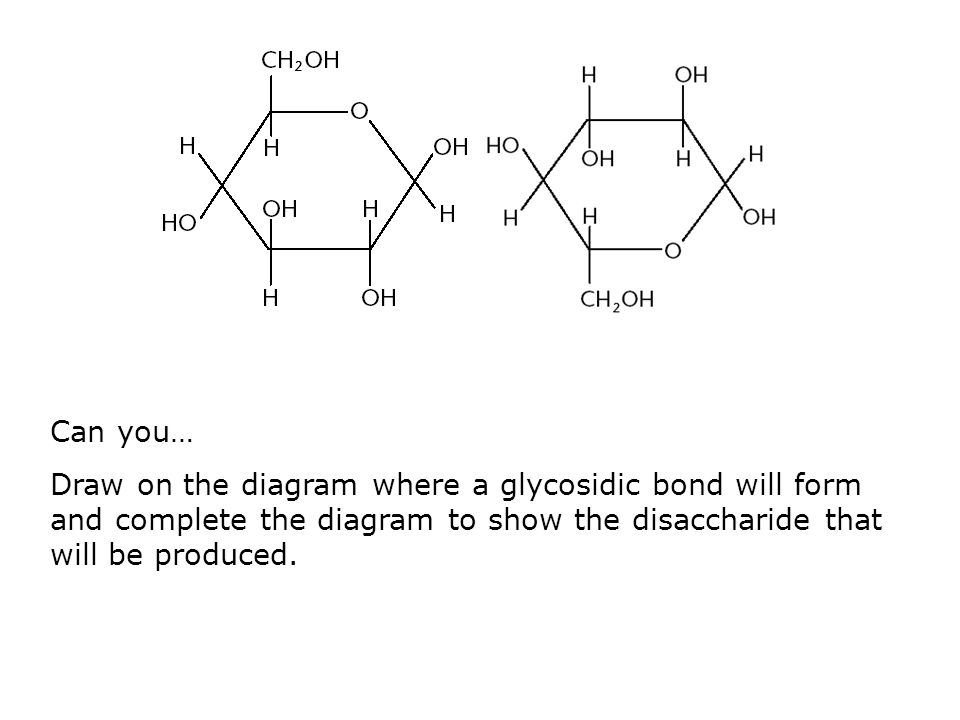 Can you… Draw on the diagram where a glycosidic bond will form and complete the diagram to show the disaccharide that will be produced.