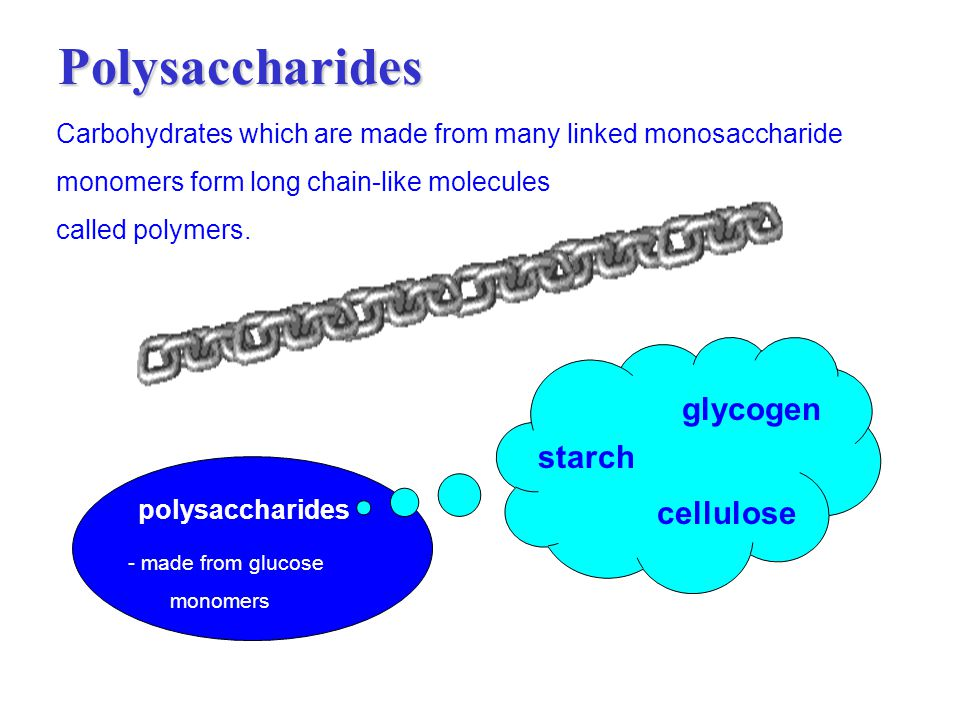 Polysaccharides glycogen starch cellulose