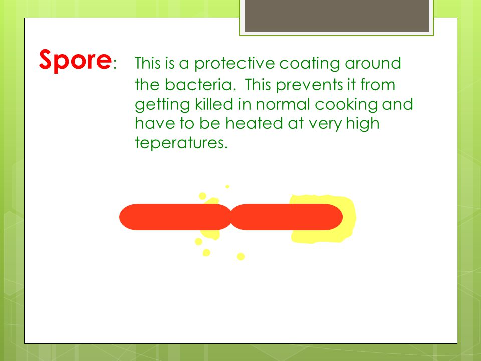 Spore: This is a protective coating around