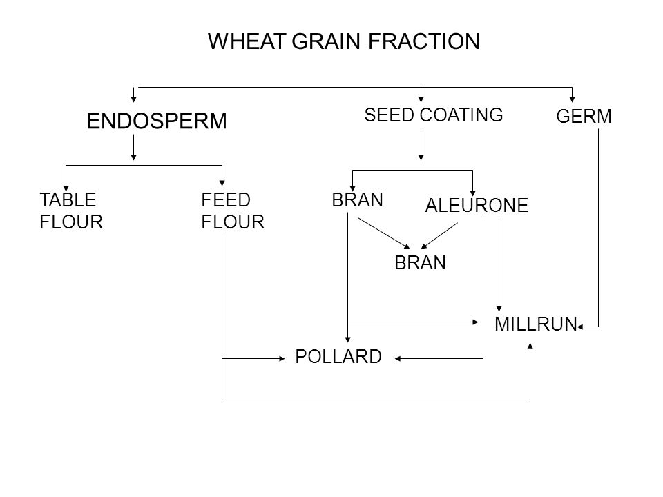 WHEAT GRAIN FRACTION ENDOSPERM SEED COATING GERM TABLE FLOUR FEED