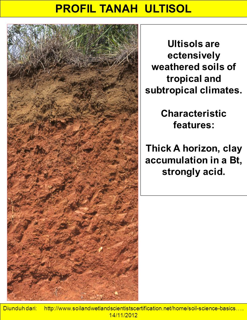 PROFIL TANAH ULTISOL Ultisols are ectensively weathered soils of tropical and subtropical climates.