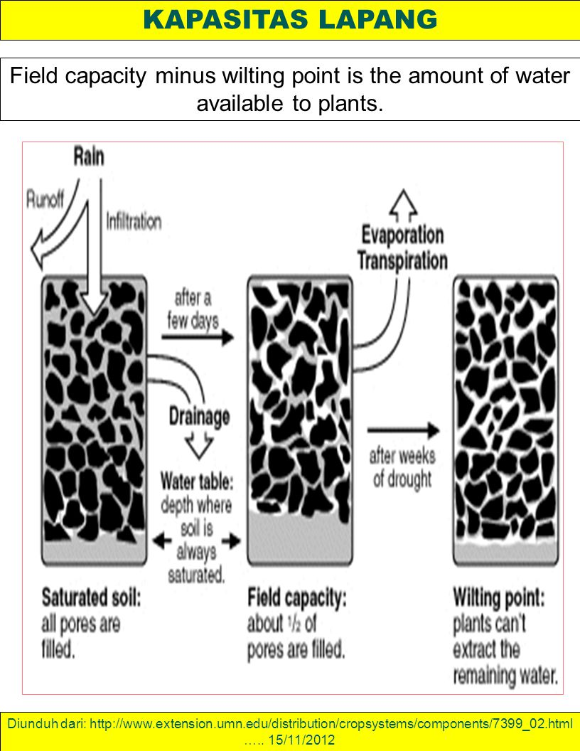 KAPASITAS LAPANG Field capacity minus wilting point is the amount of water available to plants.