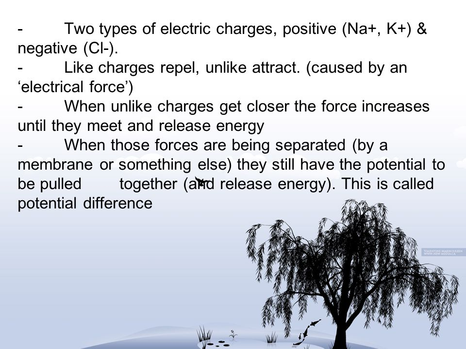 -. Two types of electric charges, positive (Na+, K+) & negative (Cl-)