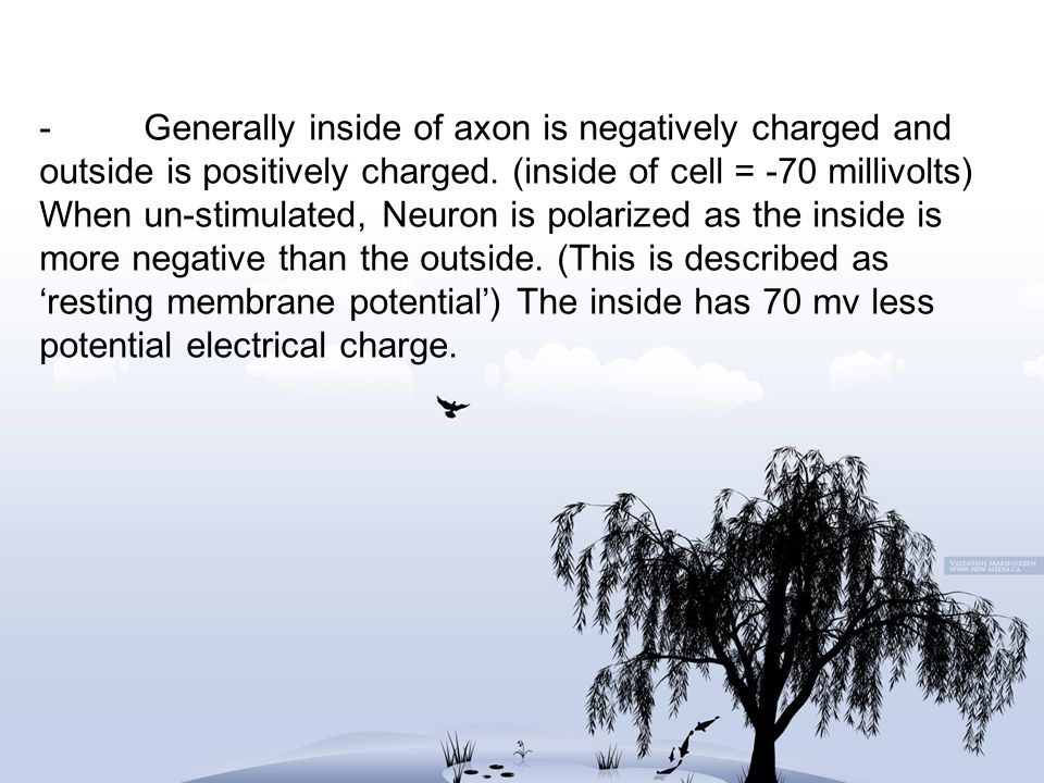 - Generally inside of axon is negatively charged and outside is positively charged.