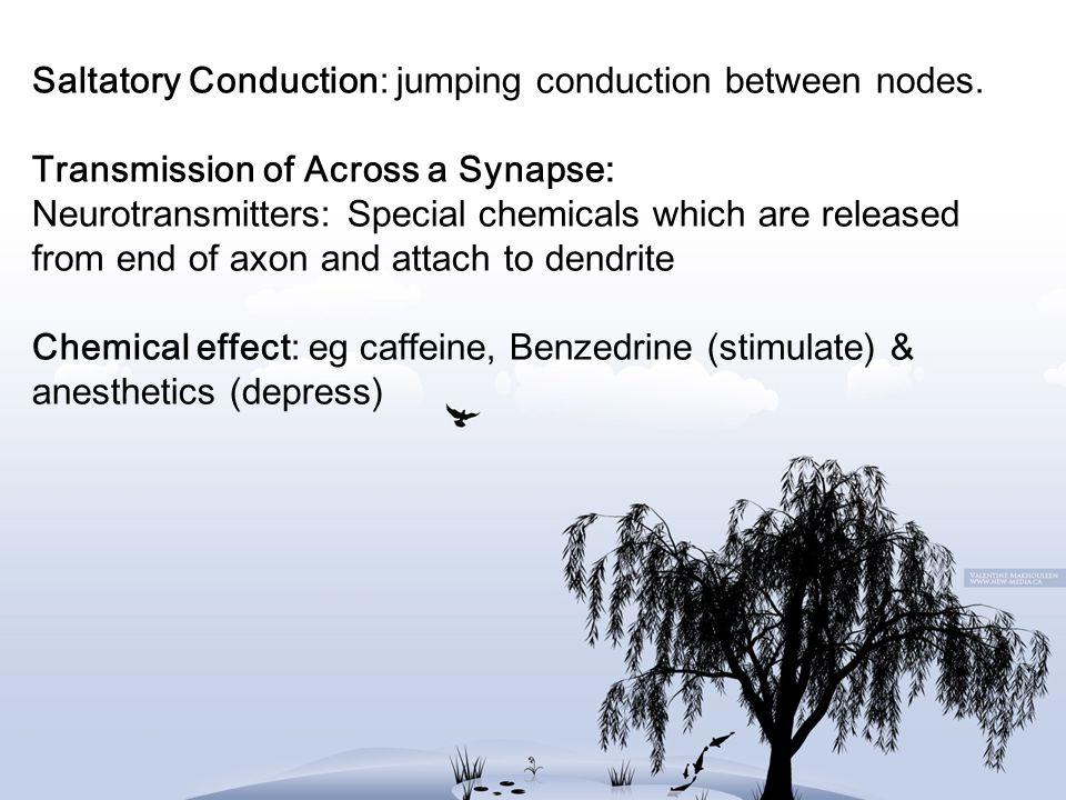Saltatory Conduction: jumping conduction between nodes
