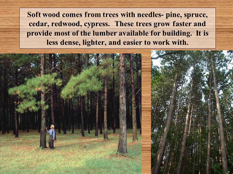 Soft wood comes from trees with needles- pine, spruce, cedar, redwood, cypress.