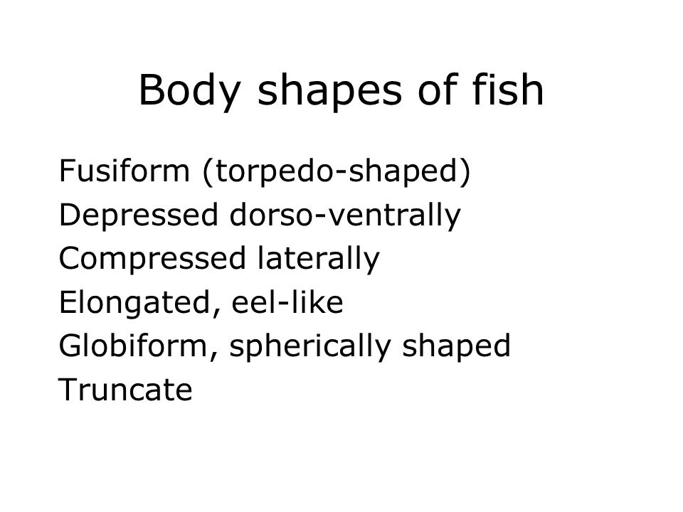 Body shapes of fish Fusiform (torpedo-shaped)