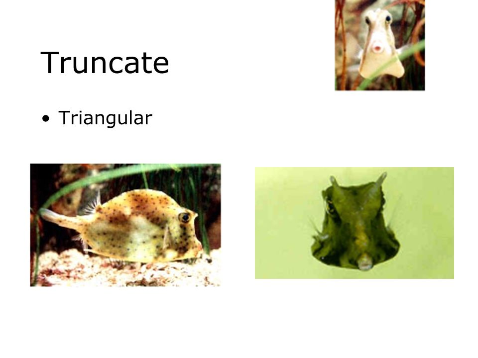 Truncate Triangular
