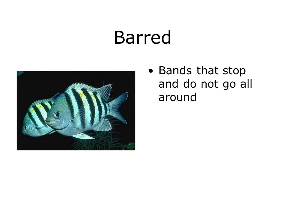 Barred Bands that stop and do not go all around