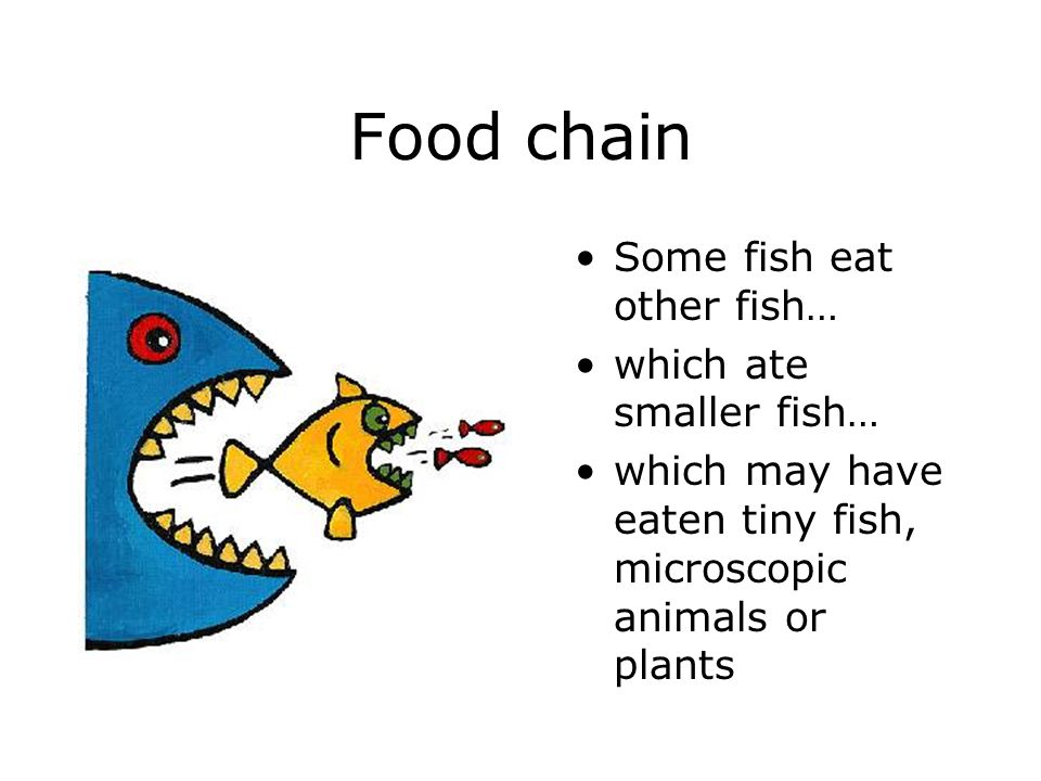 Food chain Some fish eat other fish… which ate smaller fish…