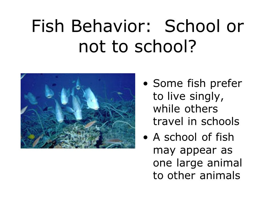 Fish Behavior: School or not to school