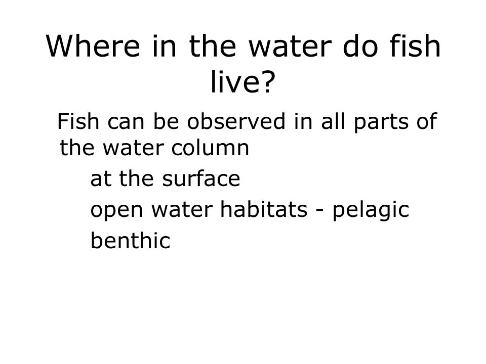 Where in the water do fish live