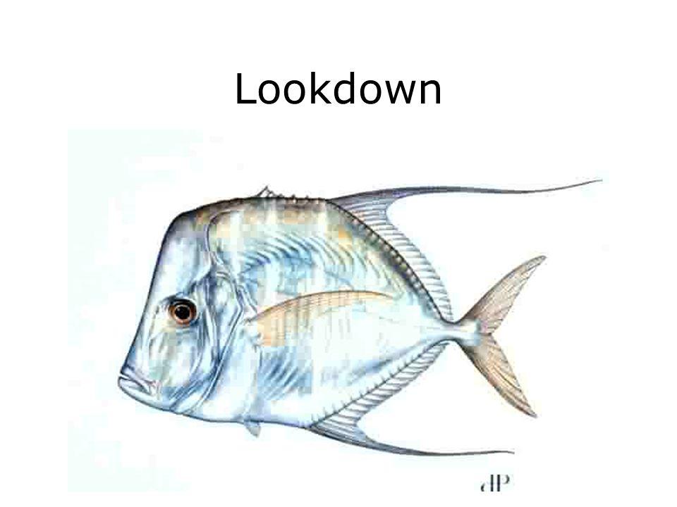 Lookdown