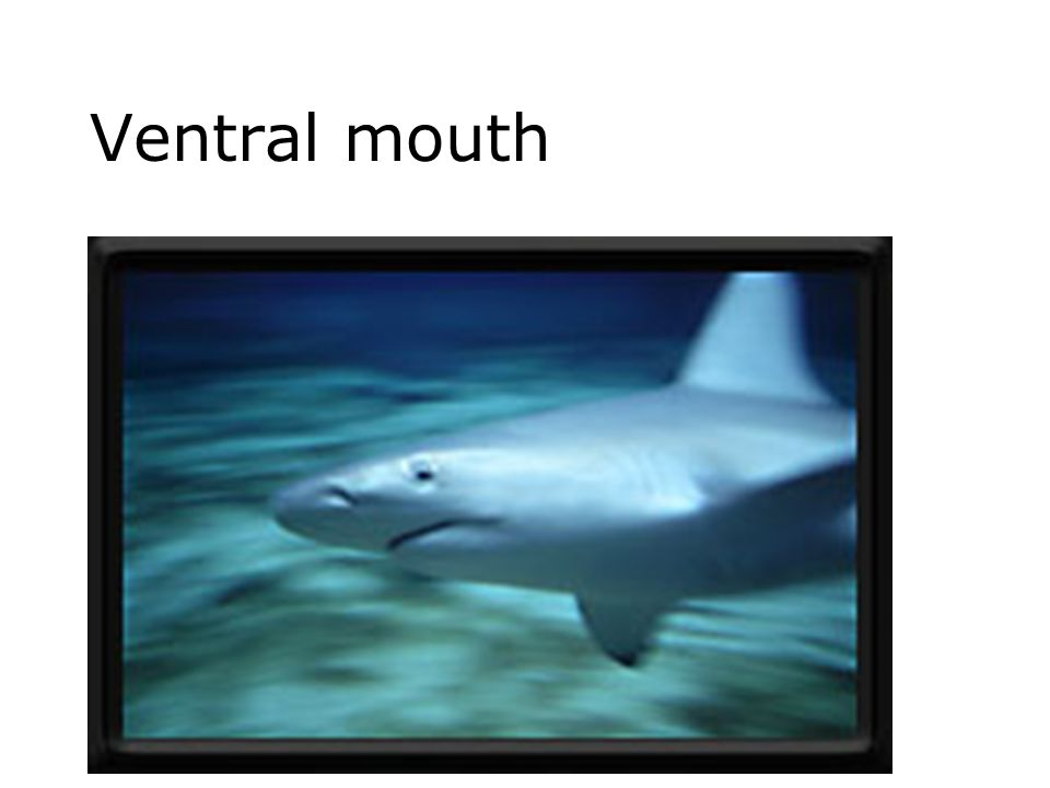 Ventral mouth