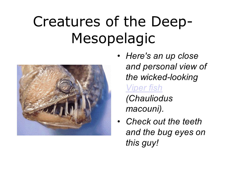Creatures of the Deep-Mesopelagic