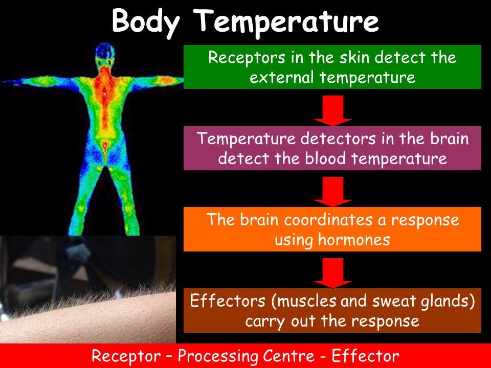 Body Temperature Receptors in the skin detect the external temperature