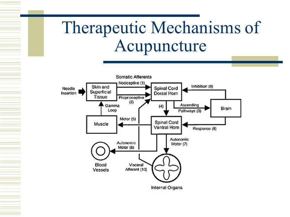 Therapeutic Mechanisms of Acupuncture
