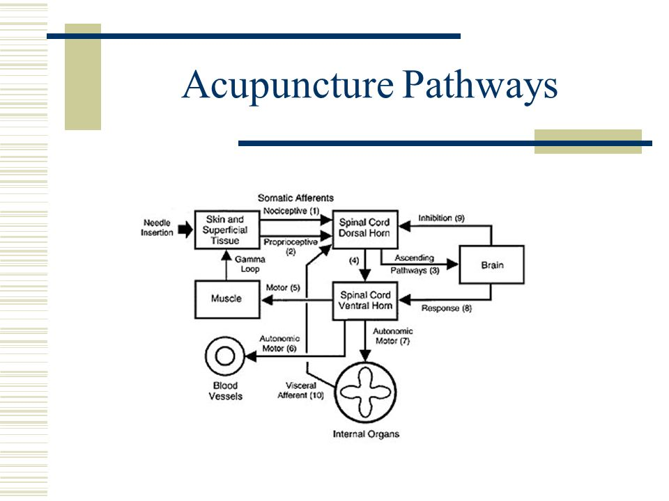 Acupuncture Pathways