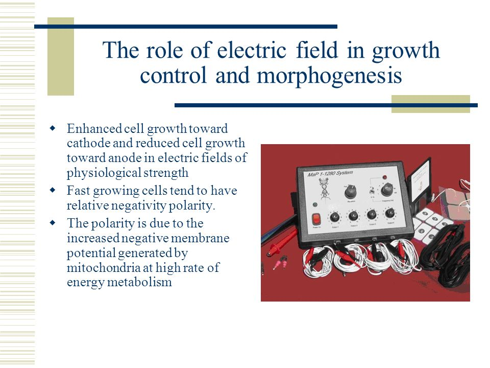 The role of electric field in growth control and morphogenesis