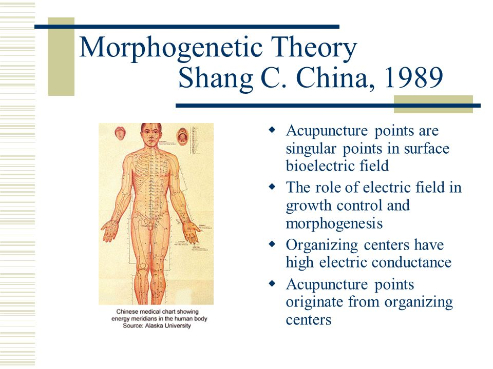 Morphogenetic Theory Shang C. China, 1989