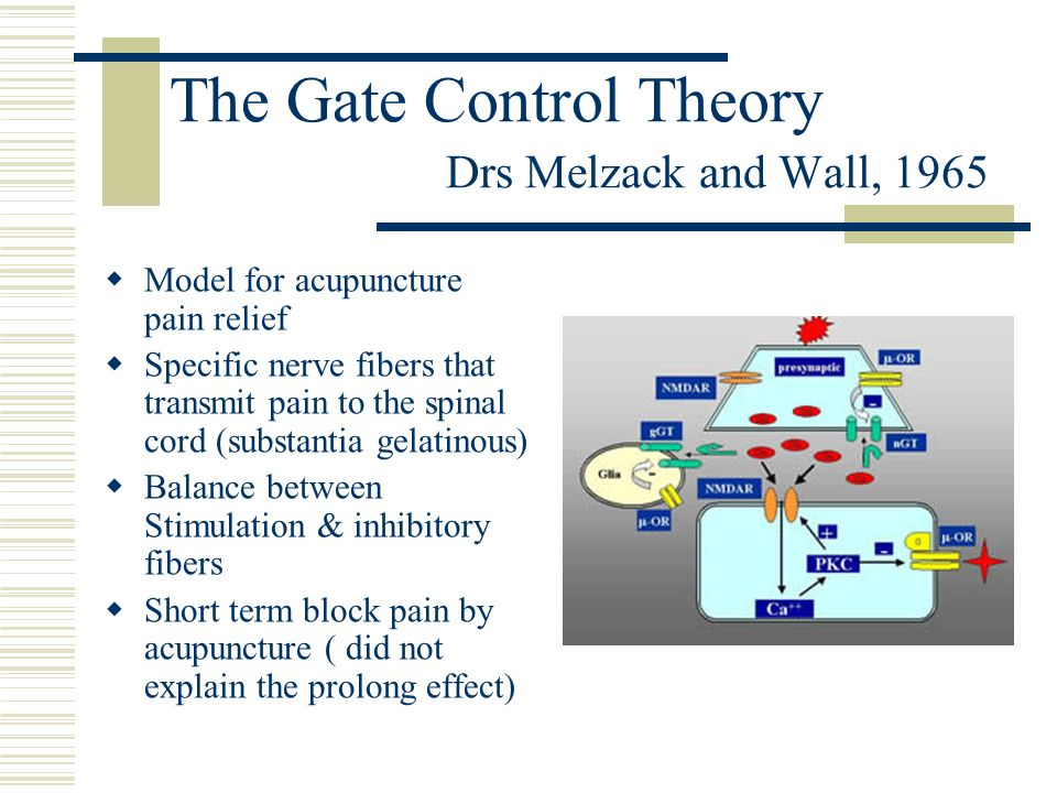 The Gate Control Theory Drs Melzack and Wall, 1965