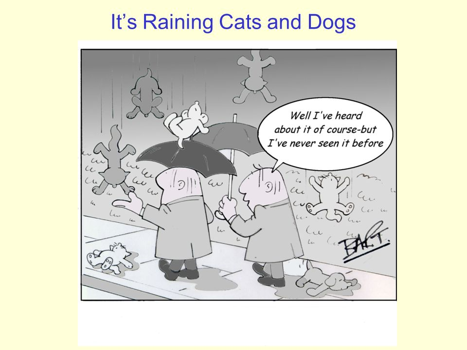 It's Raining Cats and Dogs