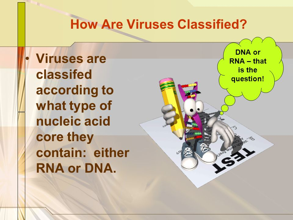 How Are Viruses Classified