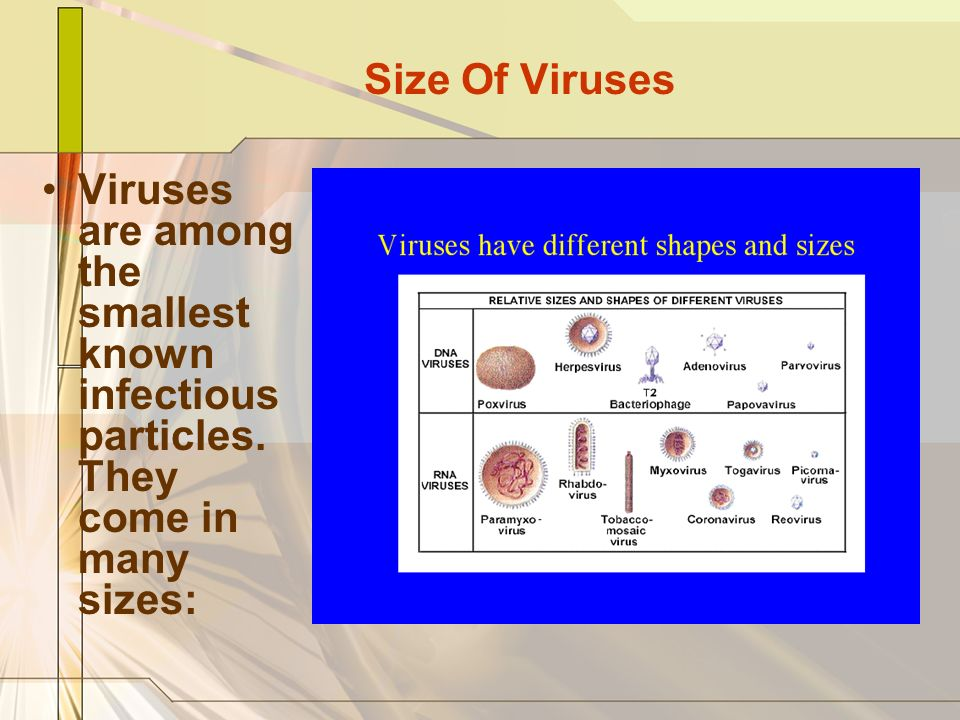 Size Of Viruses Viruses are among the smallest known infectious particles.