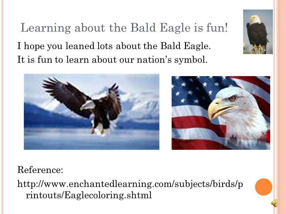 Learning about the Bald Eagle is fun!