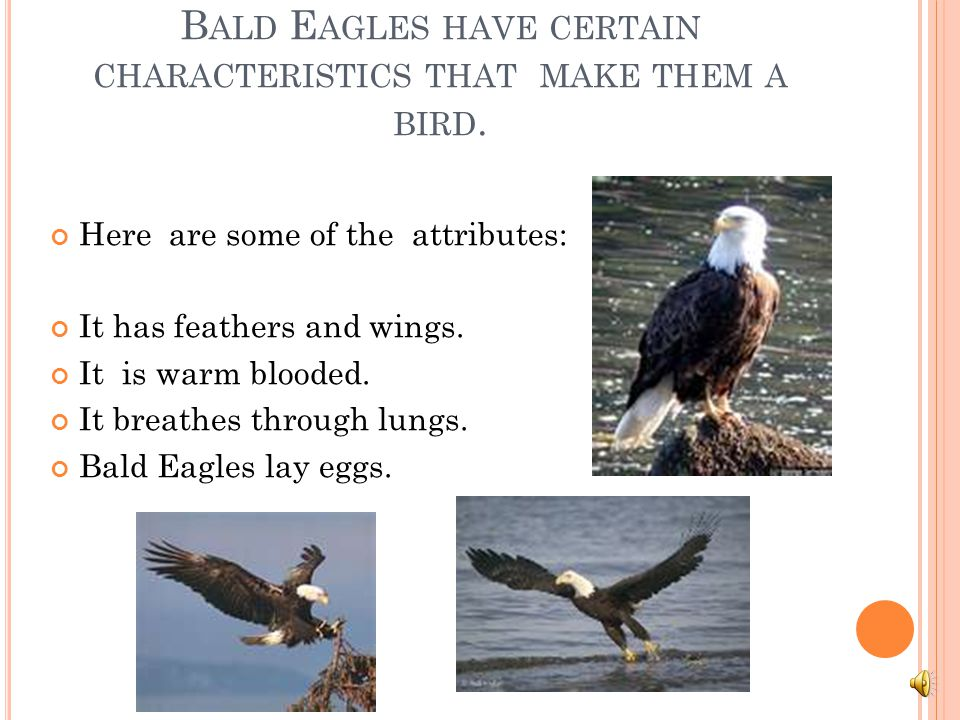 Bald Eagles have certain characteristics that make them a bird.