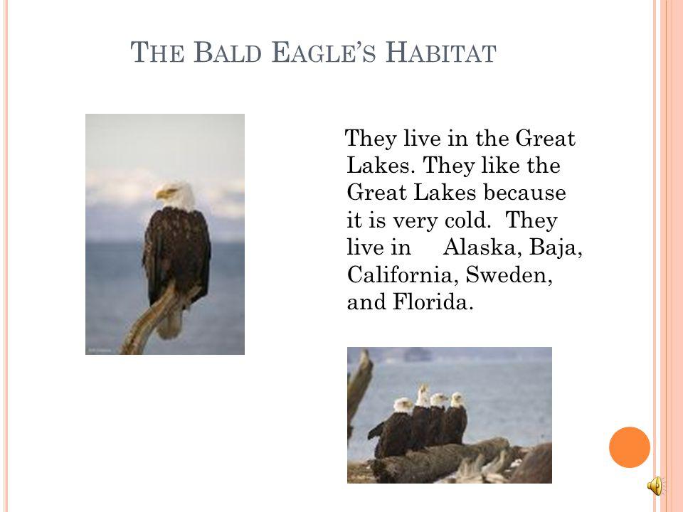The Bald Eagle's Habitat