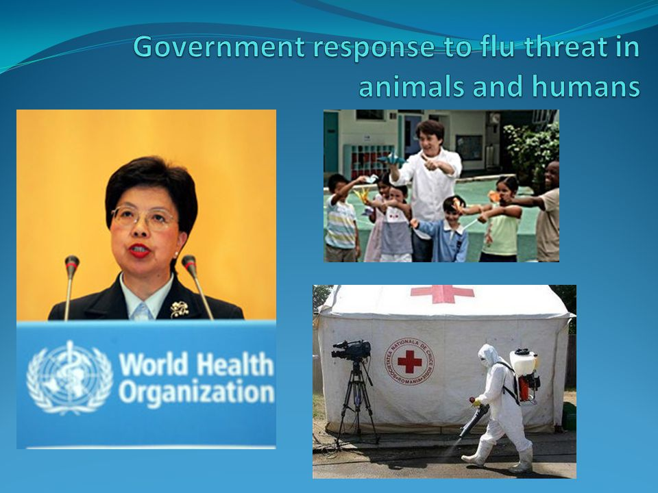 Government response to flu threat in animals and humans
