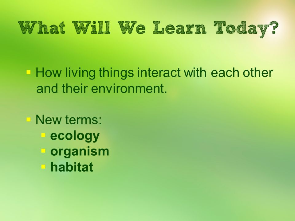 How living things interact with each other and their environment.