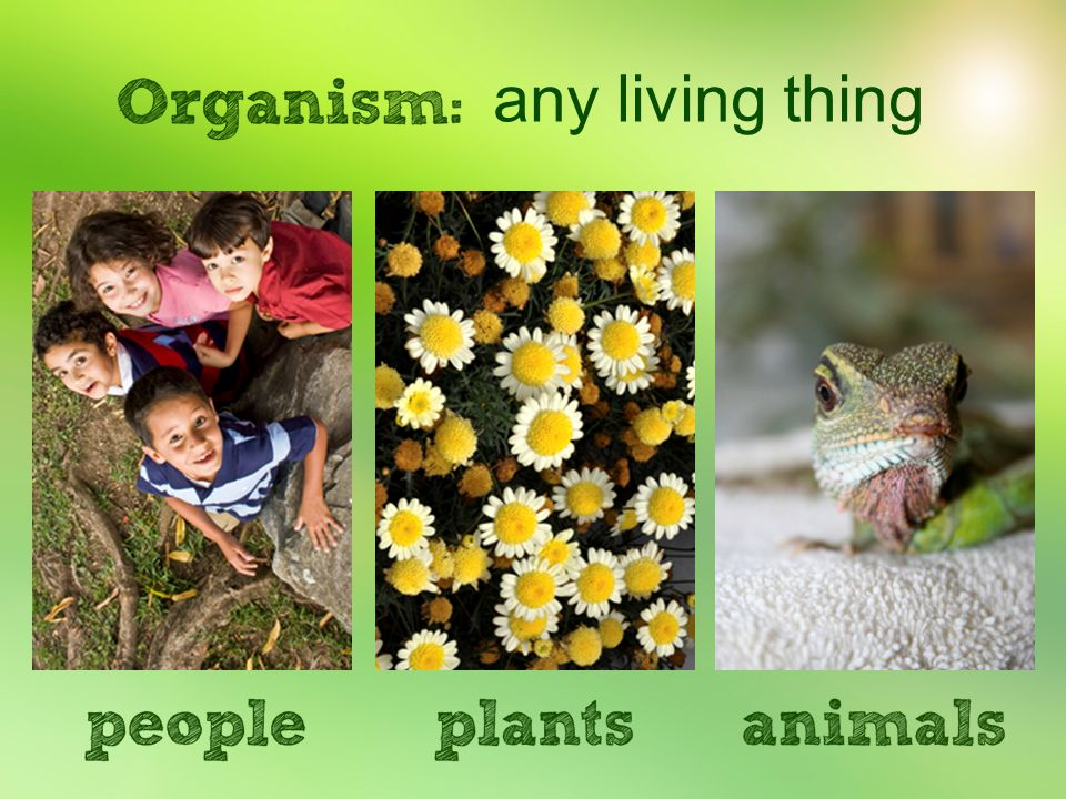 any living thing