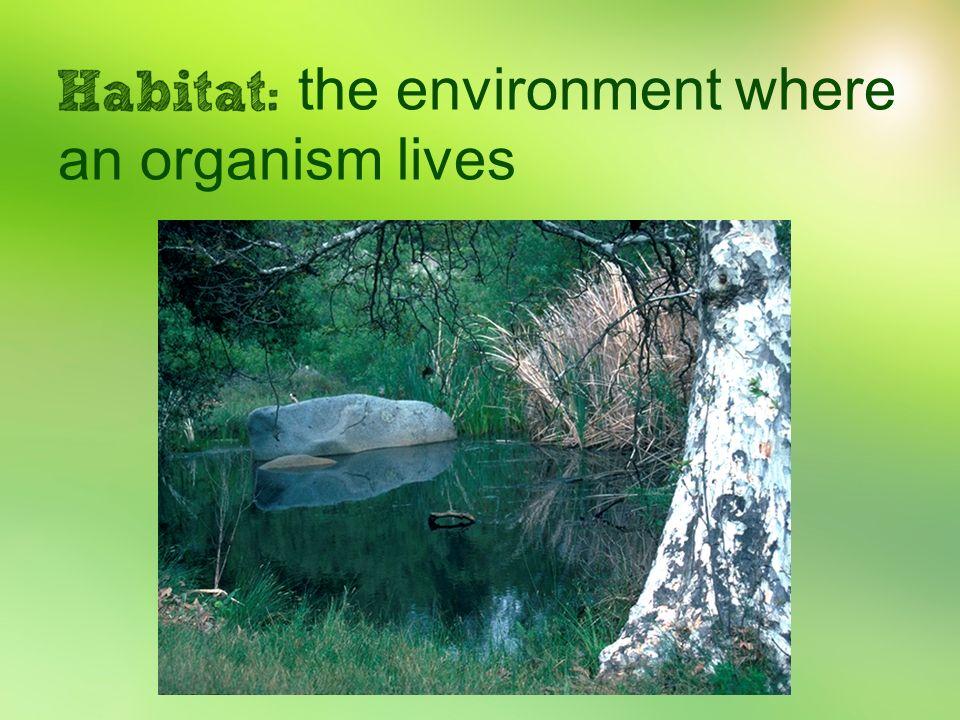 the environment where an organism lives